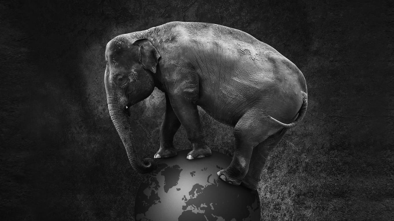 Das Bild zeigt einen Elefanten der Werbeagentur Heilbronn Leingarten.